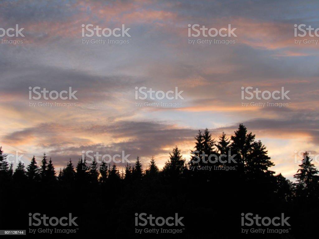 Ormanda günbatımı - Royalty-free Ağaç Stok görsel