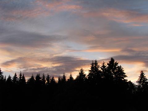 Ormanda Günbatımı Stok Fotoğraflar & Ağaç'nin Daha Fazla Resimleri