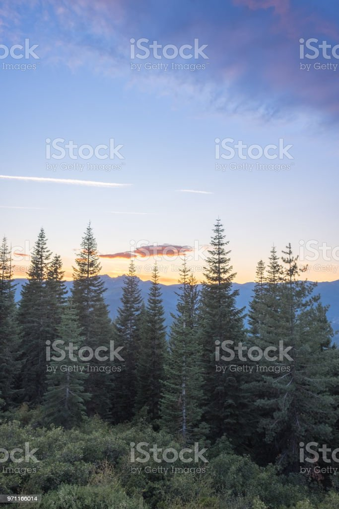 Sunset in the forest - twilight stock photo