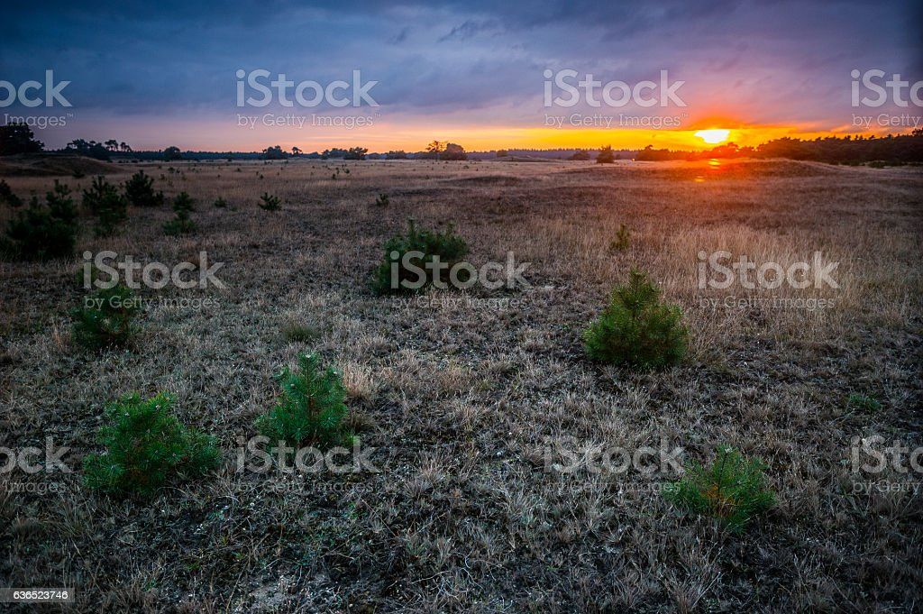 Sonnenuntergang in der Graslandschaft stock photo