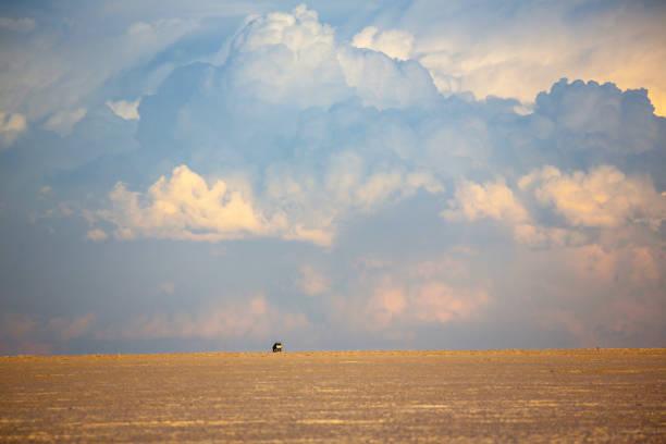 印象的なウユニ (ウユニ塩 falt) 南西ボリビアの夕日。 - アルティプラノ ストックフォトと画像