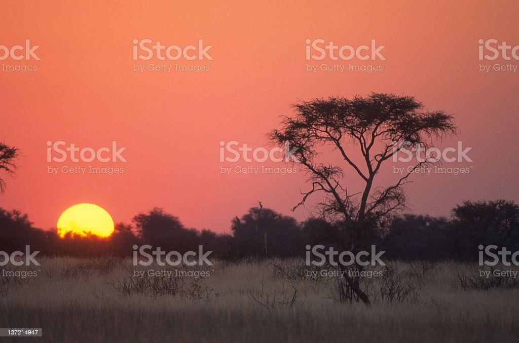 Sunset in the kalahari stock photo