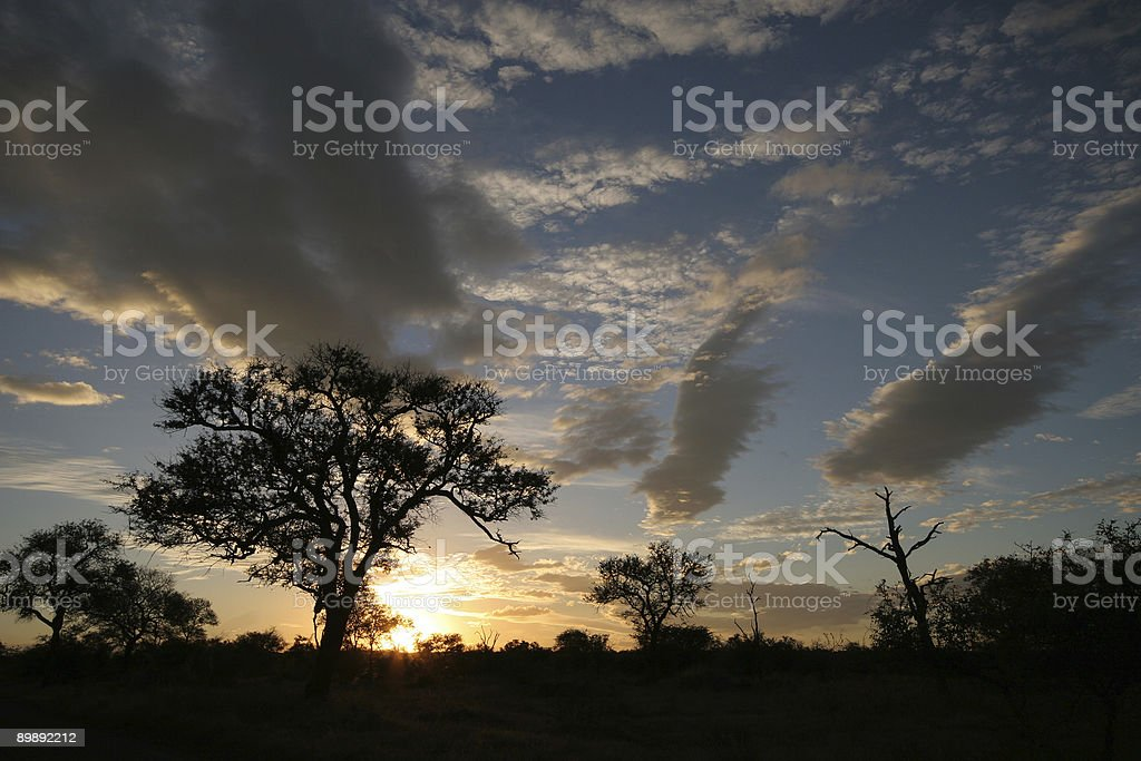 sunset in the kruger park royalty-free stock photo