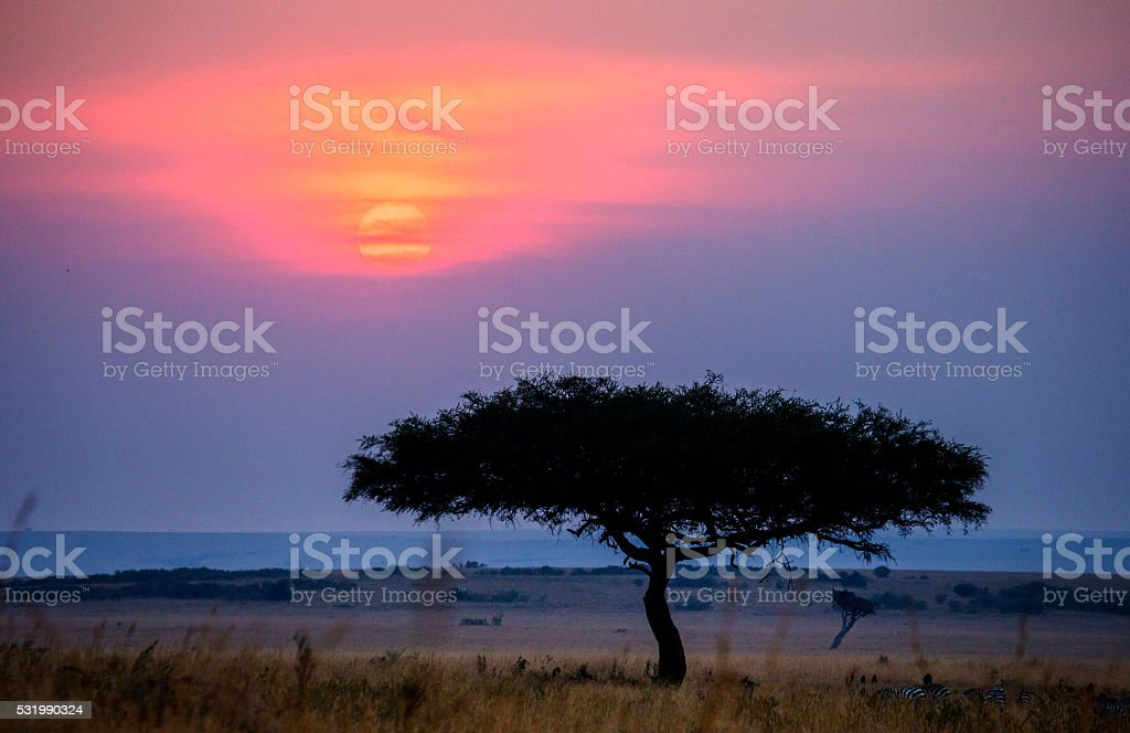 Sunset in the Maasai Mara National Park. Africa. Kenya royalty-free stock photo