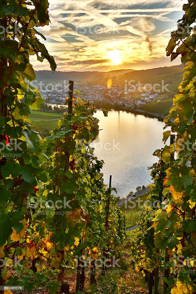 Sunset in the Moselle Valley stock photo