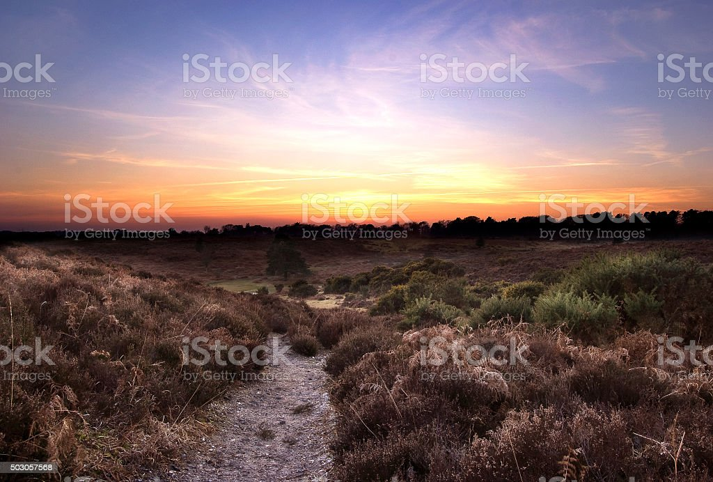 Sunset in the New Forest stock photo