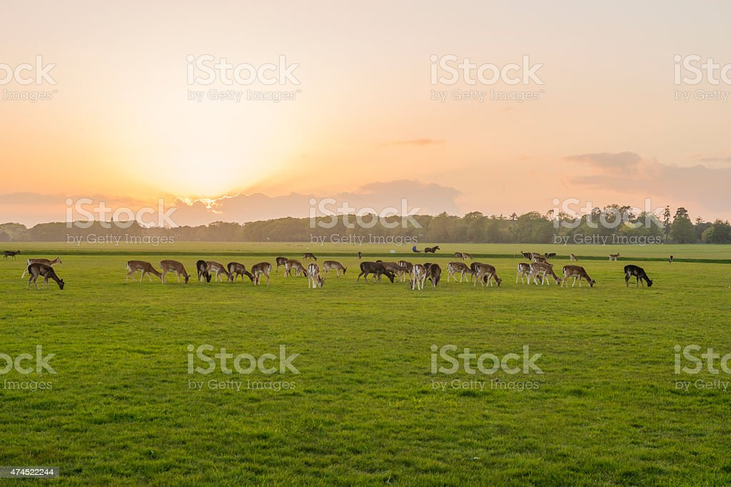 sunset in the Phoenix Park, Dublin, Ireland. royalty-free stock photo