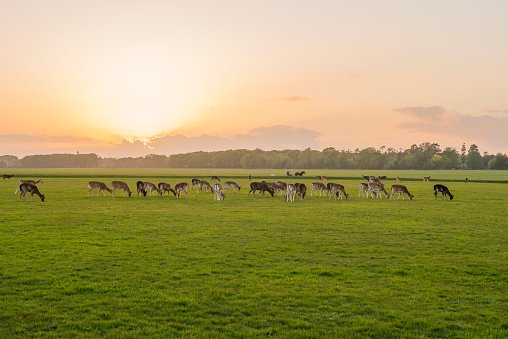 Sunset In The Phoenix Park Dublin Ireland Stock Photo - Download Image Now