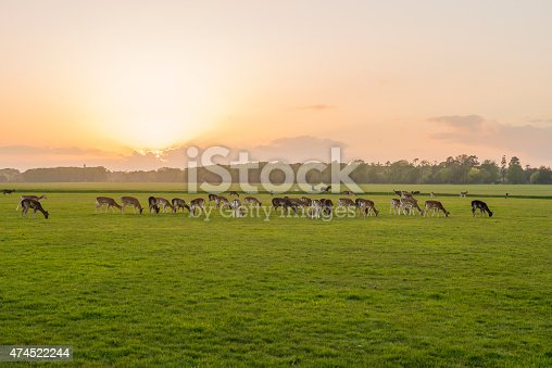 Sunset In The Phoenix Park Dublin Ireland Stock Photo & More Pictures of 2015