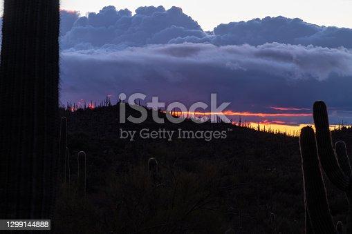 Saguaro Cactus silhouette and scenic desert landscape at sunset in Phoenix, Arizona.