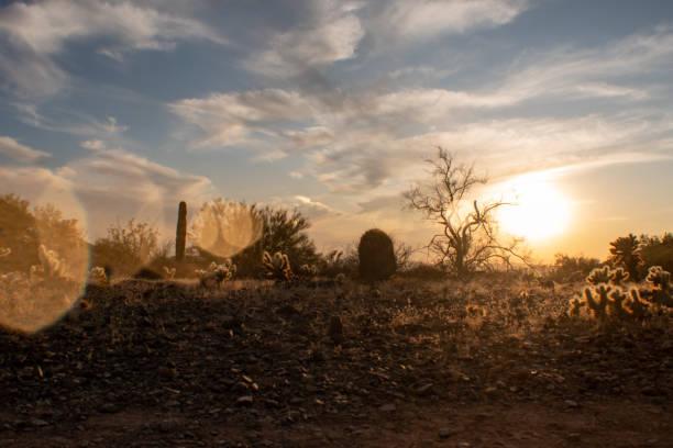 Sunset in the Sonoran Desert stock photo