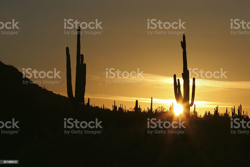 Sunset in the Sonoran Desert royalty-free stock photo
