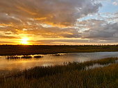 giant orange sun sets behind the bayou of a cypress swamp and reflects in the rivergiant orange sun sets behind the bayou of a cypress swamp and reflects in the river