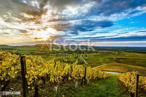 Couché de soleil dans le vignoble du Vernois jauni par l'automne.