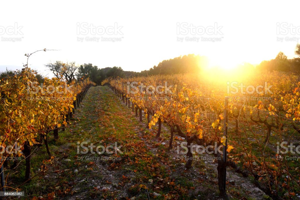 Sunset in the vineyards of the Priorat near de village of Morera de Montsant, Tarragona province, Catalonia, Spain stock photo