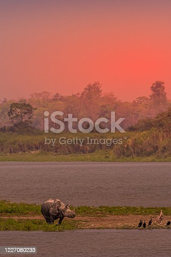 This image of Sunset with animals and birds is taken at Kaziranga National Park in Assam, India.