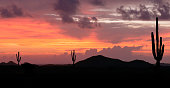 Arizona desert sunset with giant saguaro silhouette