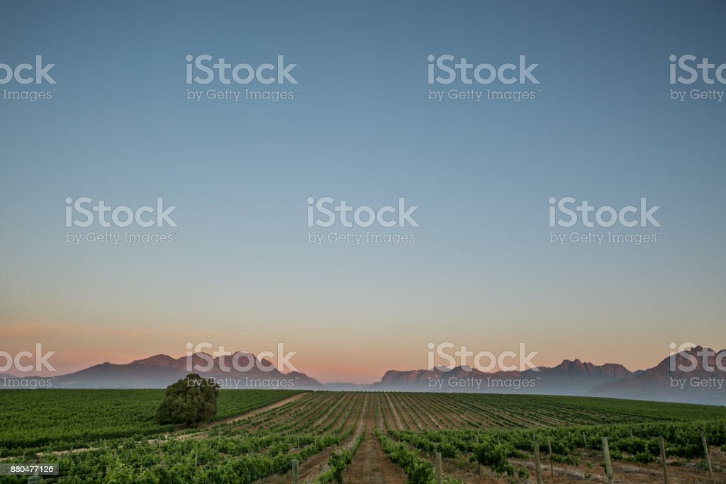 Sunset in the Winelands South Africa stock photo