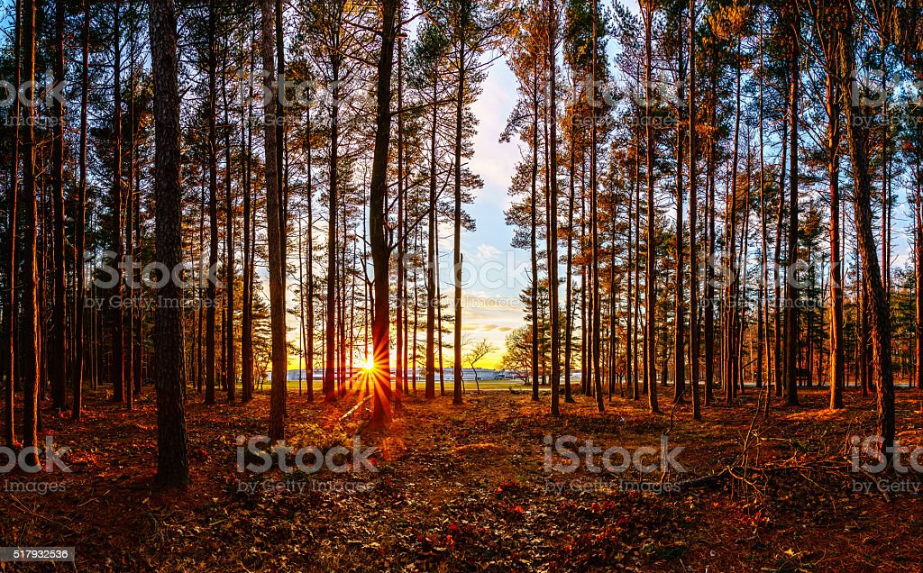 Sunset in the woods stock photo