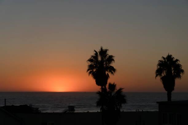 Sonnenuntergang in Venedig mit Palmen – Foto