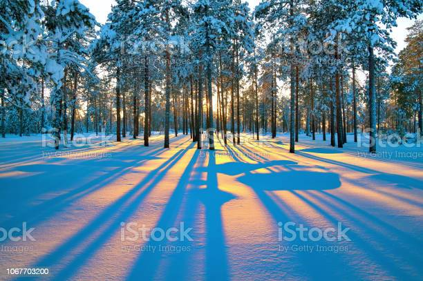 Photo of Sunset in winter forest