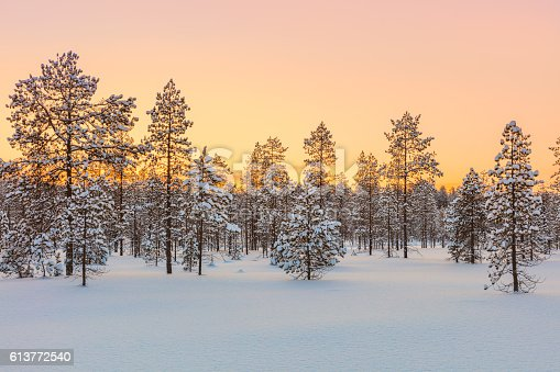 Sunset in winter forest, trees and snow - beautiful winter season landscape