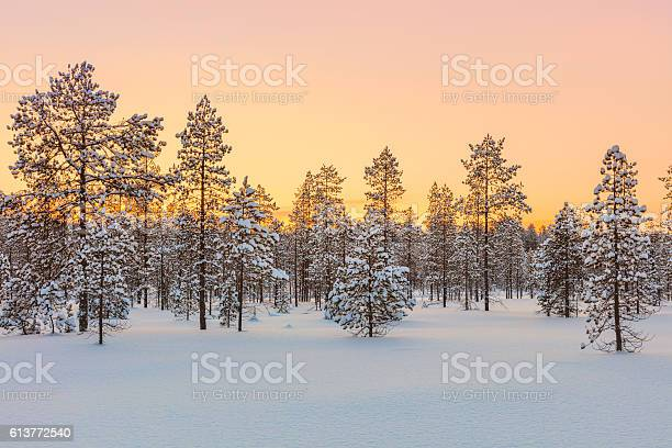 Photo of Sunset in winter forest, trees and snow