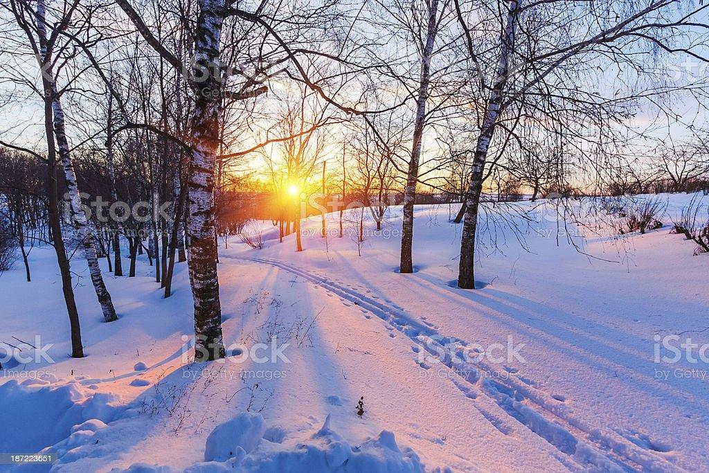 Sunset in winter park stock photo