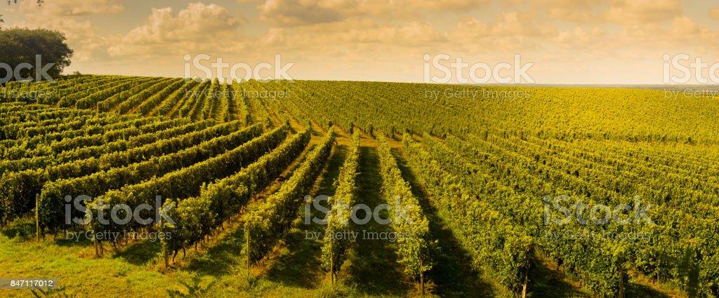 Sunset, Landscape, Bordeaux Wineyard, France stock photo