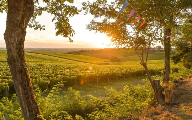 sonnenuntergang landschaft bordeaux weinberg frankreich - bordeaux wein stock-fotos und bilder