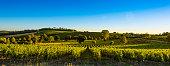 France, Aquitaine,Gironde (33), Capian.Vignoble de Bordeaux.Paysage viticole prés de Capia en fin d' été.