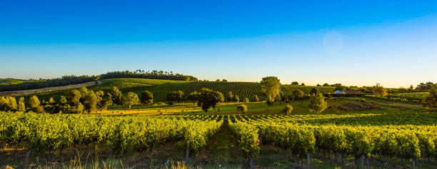 Sunset landscape bordeaux wineyard france stock photo