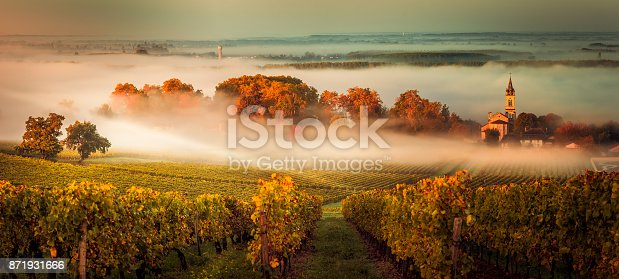 Sunset landscape and smog in bordeaux wineyard france, europe