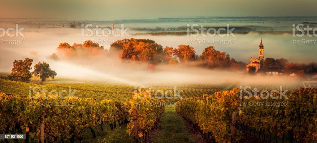 Sunset landscape bordeaux wineyard france - fotografia de stock