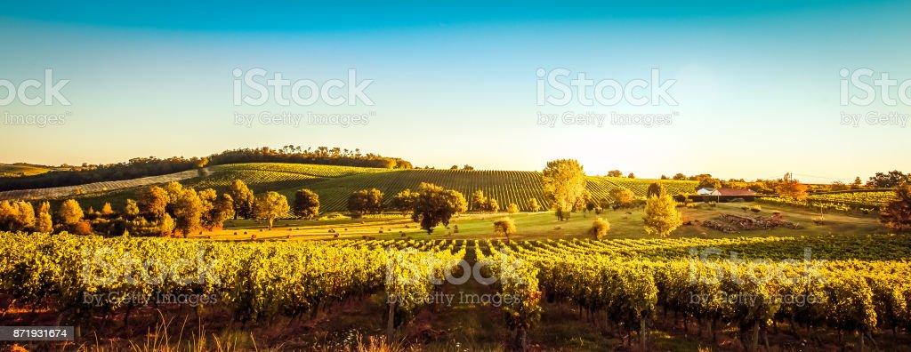 Sunset landscape bordeaux wineyard france stock photo