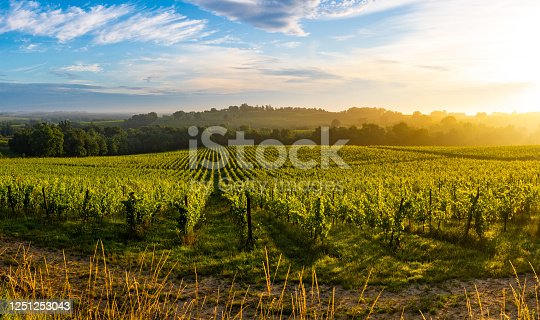 Sunset landscape, Bordeaux wineyard, Langoiran, france