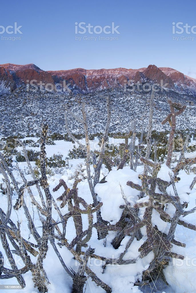 sunset landscape desert mountain winter snow cactus royalty-free stock photo