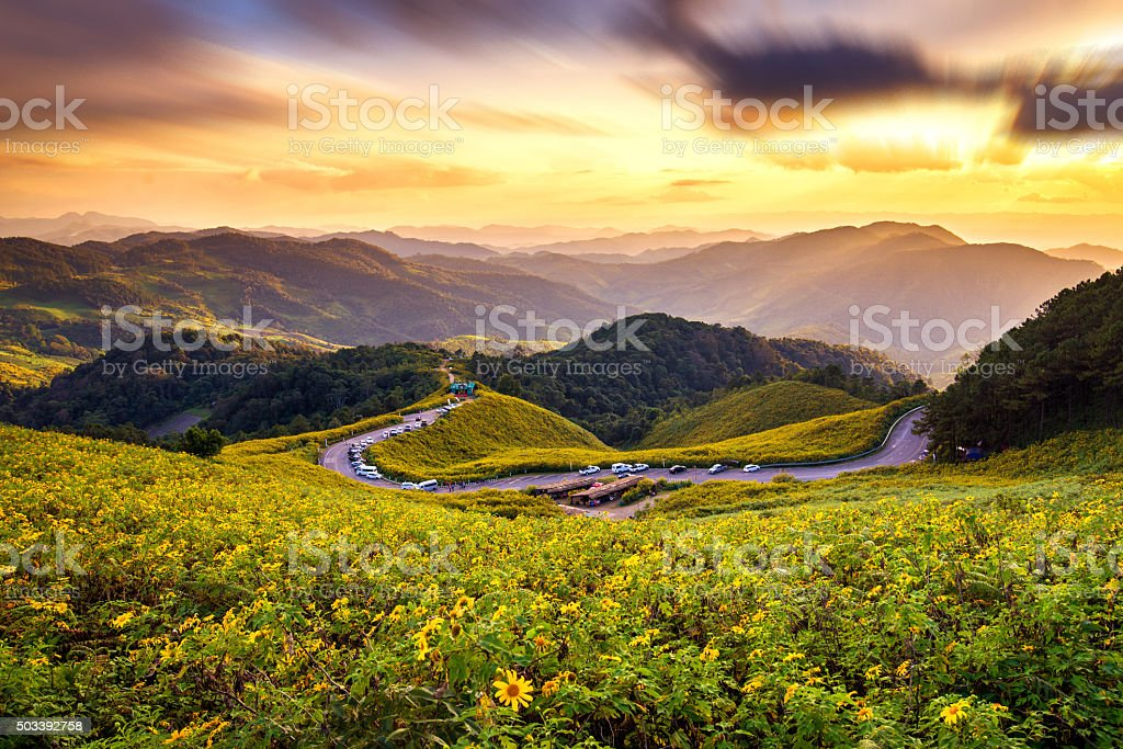 Sunset Landscape nature Mexican sunflower field stock photo
