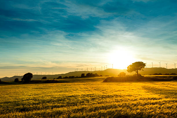 Sunset landscape on a meadow of wheat stock photo