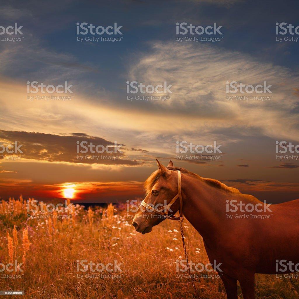 Sunset landscape with chestnut horse royalty-free stock photo