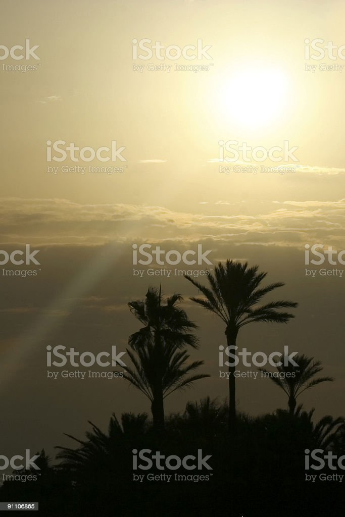 Sunset Landscape with Palms - Mediterranean Sea royalty-free stock photo