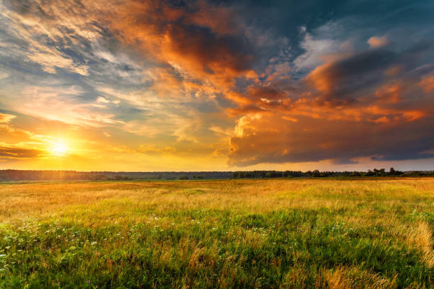 Sunset landscape with plain and forest Sunset landscape with a plain wild grass field and a forest on background. sunset stock pictures, royalty-free photos & images