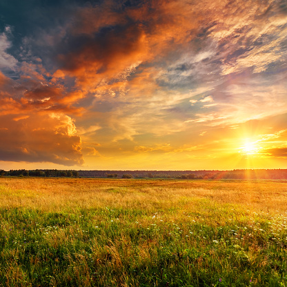 istock Sunset landscape with plain and forest 1130885929