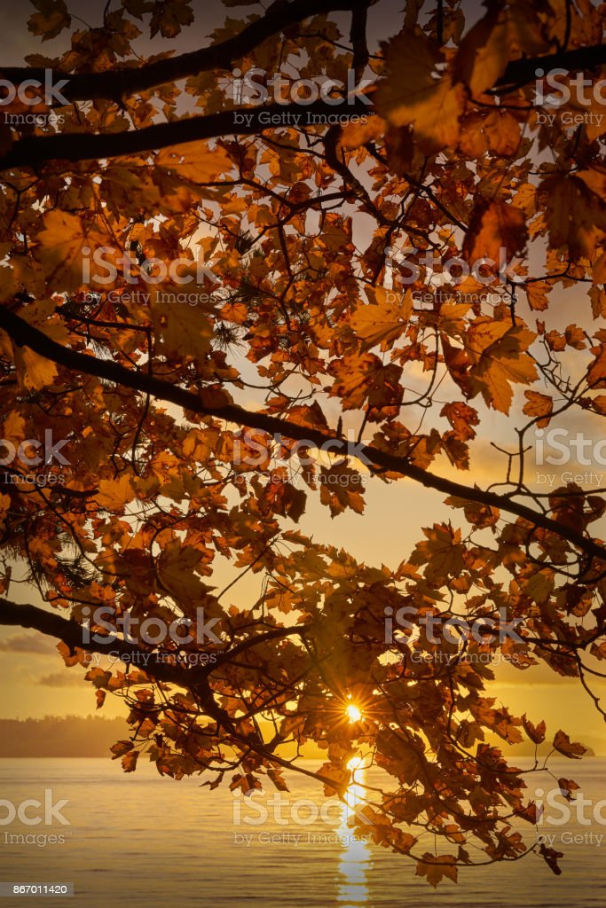 Sunset Leaves, Stanley Park, Vancouver stock photo