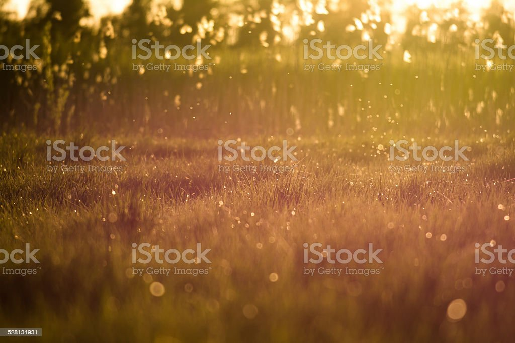 Sunset magical light above a patch of grass stock photo