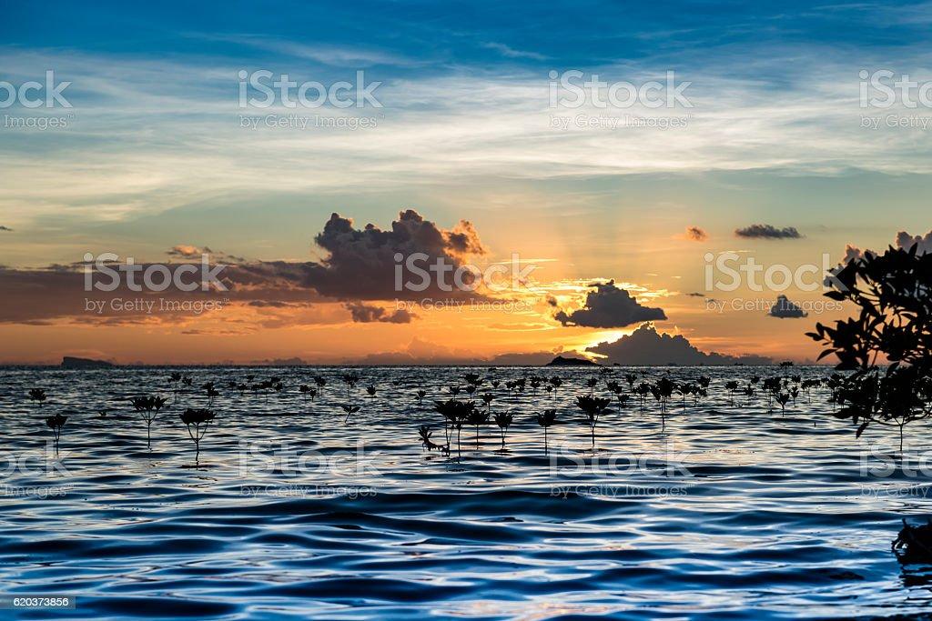 sunset mangrove foto de stock royalty-free
