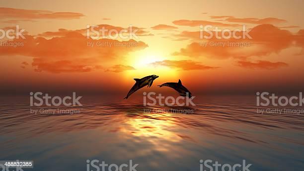 Sunset ocean with dolphins jumping picture id488832385?b=1&k=6&m=488832385&s=612x612&h=ajraivnq4c7vxmvqn6hx1uufu ppscoyfvqnfg6osww=