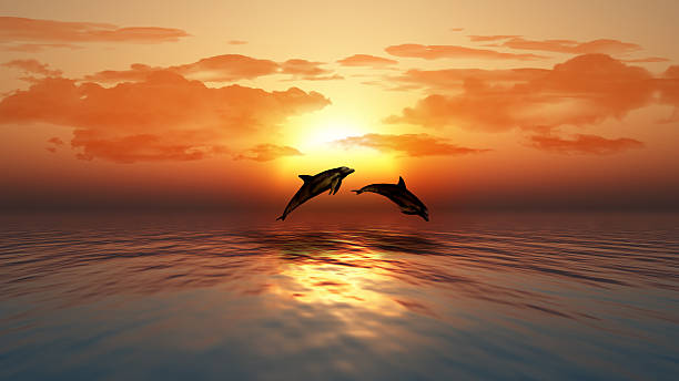 Sunset ocean with dolphins jumping 3D render of a sunset over an ocean with dolphins jumping dolphin stock pictures, royalty-free photos & images