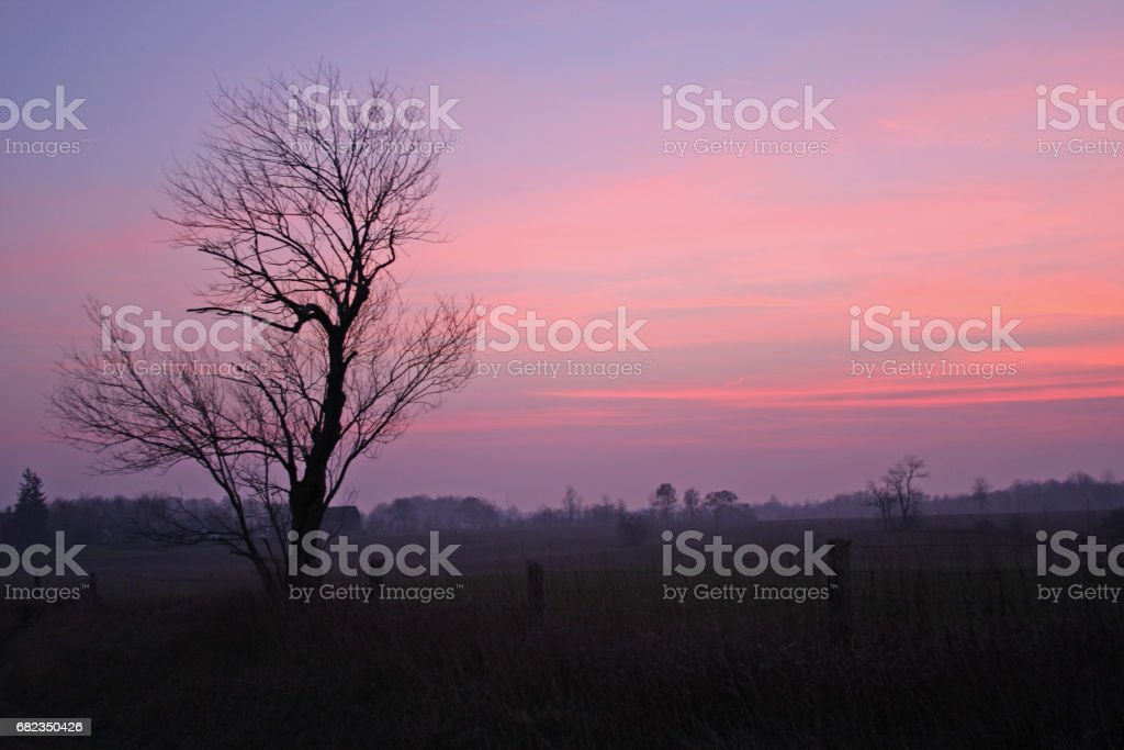 Sunset on a foggy country evening foto stock royalty-free