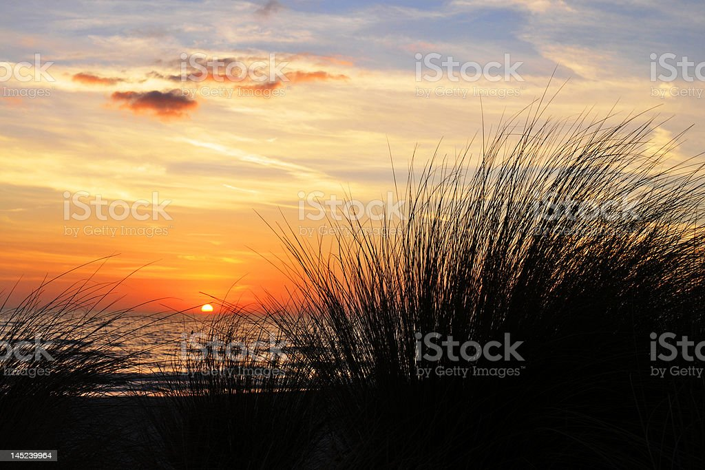 Sunset on a Grassy Beach royalty-free stock photo